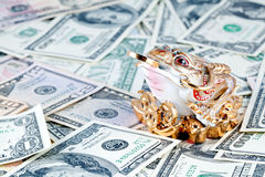 Dollars. 3 Legged Toad against money Royalty Free Stock Photo