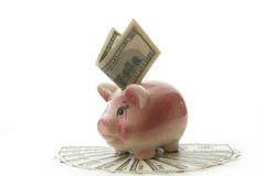 Dollars. Piggy bank on a dollars stock photo
