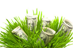 Dollars. In grass isolated on white royalty free stock photography