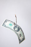 Dollars as a bait hang on a hook Stock Photography