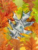 Dollars and autumn leaves Royalty Free Stock Photos