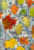 Dollars and autumn leaves Royalty Free Stock Image
