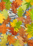 Dollars and autumn leaves Royalty Free Stock Photography