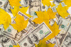 Dollars in autumn maple leaves. Dollar notes littered up among autumnal yellow maple leaves Royalty Free Stock Images