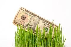 Dollars croissants La végétation des billets d'un dollar dessus Images stock