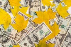 Dollars dans des feuilles d'érable d'automne Images libres de droits