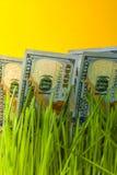 Dollars dans l'herbe verte Image libre de droits