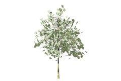 dollars de lame d'arbre d'argent illustration libre de droits