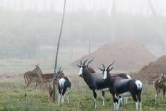 Dollars, die in den Nebel hängt über Addo Wildlife laufen Stockbilder