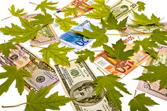 Dollars, Euro and yellow leaves Royalty Free Stock Image
