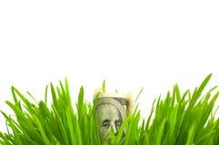 Dollars in gras Royalty-vrije Stock Foto