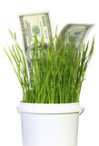 Dollars in grass Royalty Free Stock Images