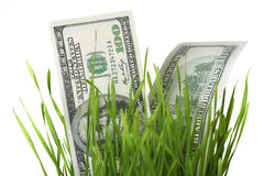 Dollars in grass Stock Image