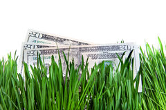 Dollars in the Grass Stock Photography