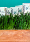 Dollars in the Grass Stock Photo