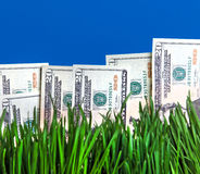Dollars in the Grass Stock Images