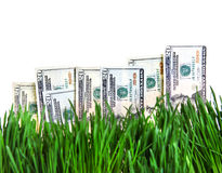 Dollars in the Grass Royalty Free Stock Photos