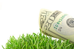Dollars in green grass Royalty Free Stock Images
