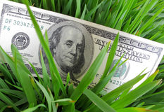 Dollars in green grass Royalty Free Stock Photography