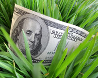 Dollars in green grass Stock Image