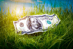 Dollars in the green grass Stock Image