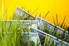 Dollars in green grass Stock Photography