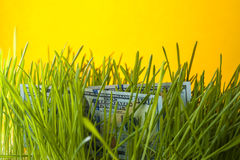 Dollars in green grass. Stock Image
