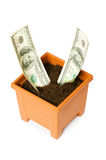 Dollars growing in the pot Royalty Free Stock Photography
