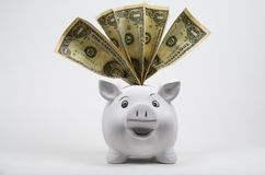 Dollars in a Piggy Bank Stock Image