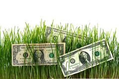 Dollars on sprouted wheat to increase profits. Concept of business and finance. Dollars on sprouted wheat to increase profits Stock Photo