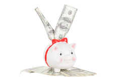 Dollars stick out of the pig moneybox Royalty Free Stock Photos