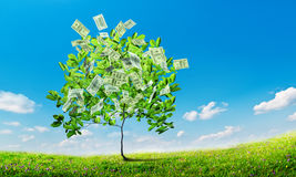 Dollars tree Stock Image