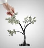 Dollarsboom Stock Afbeelding