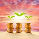 Dollarschein, der im Boden wächst Lizenzfreies Stockfoto