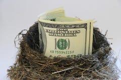Dollarscheine in einem Vogelnest Stockbild
