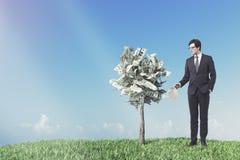 Dollarträd i en kruka, äng, affärsman arkivbild