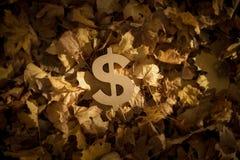 Dollarvalutasymbol på Autumn Leaves i sol för sen afton arkivfoto