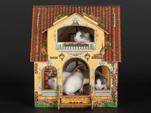 Dollhouse. Very small baby rats in the dollhouse Stock Images