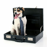 Dollie The Business Dog stock image
