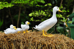 Dolls in the garden. A family of doll duck in the garden Stock Photography