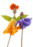 Dolls from poppy head and flower. Isolated on white Stock Image