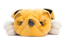 Dolly dog yellow on white background Royalty Free Stock Images