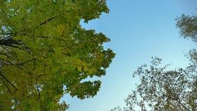 Dolly onderaan bovenkant van bomen wordt geschoten die zich met camera op blauwe hemelachtergrond die langzaam bewegen stock video
