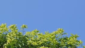 Dolly schot van treetops en blauwe hemel stock videobeelden