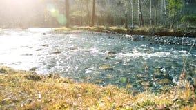 Dolly schuif van het bespattende water in een bergrivier dichtbij bos Natte rotsen en zonstralen die wordt geschoten Horizontale  stock footage