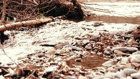 Dolly schuif van het bespattende water in een bergrivier dichtbij bos Natte rotsen en zonstralen die wordt geschoten Horizontale  stock videobeelden