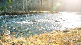 Dolly schuif van het bespattende water in een bergrivier dichtbij bos Natte rotsen en zonstralen die wordt geschoten Horizontale  stock video