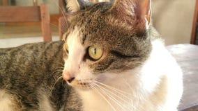Dolly Shot With Cat Lying op Houten Lijst stock videobeelden