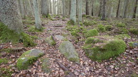 Dolly shot of a hiking trail amidst a mixed wood forest in the rock formations stock video