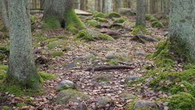 Dolly shot of a hiking trail amidst a mixed wood forest in the rock formations stock footage